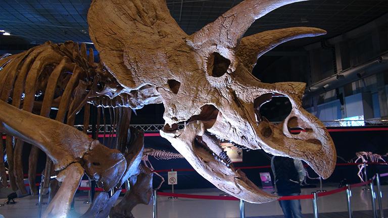 えひめ大恐竜博05
