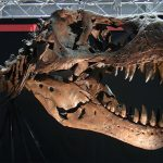 えひめ大恐竜博06