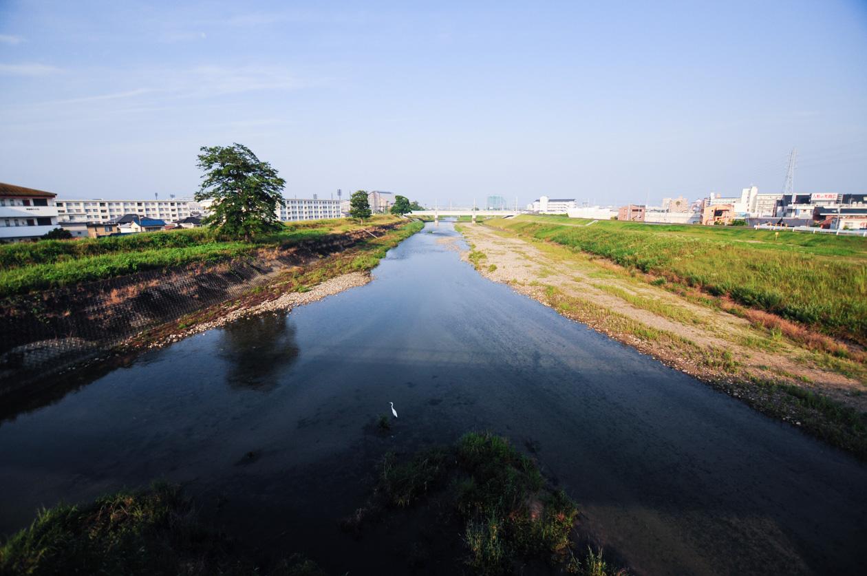 重信川の白い鳥