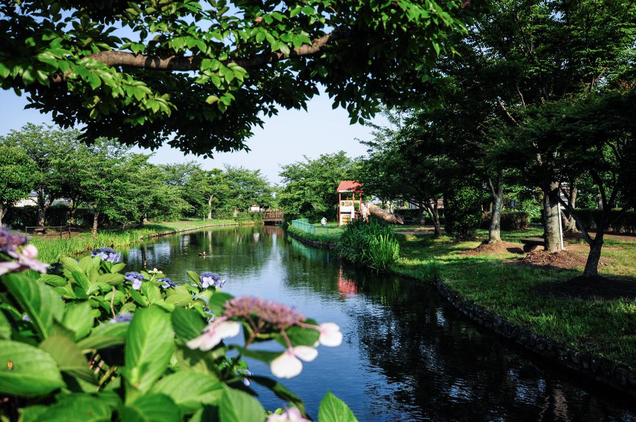 ひょこたん池の池